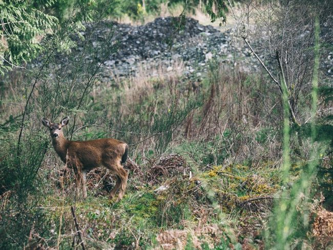 Legal Shooting Times For Deer Hunting